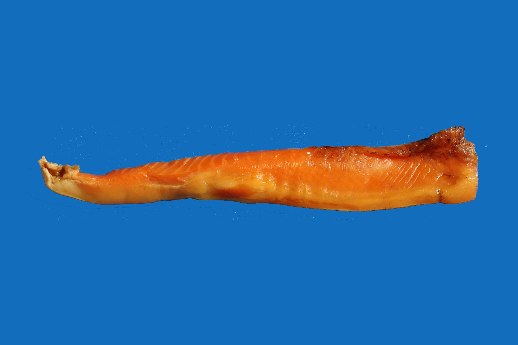 желтый толстолобик